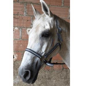 Phicogis-equitation-retraite-chevaux-Holy-1
