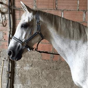 Phicogis-equitation-retraite-chevaux-holy-2