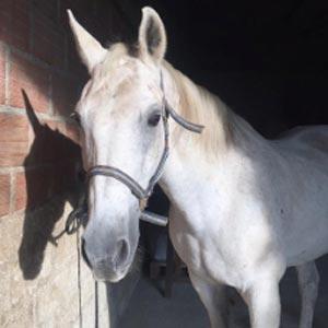 Phicogis-equitation-retraite-chevaux-holy-3