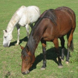phicogis-equitation-chevaux-retraite-holy-15