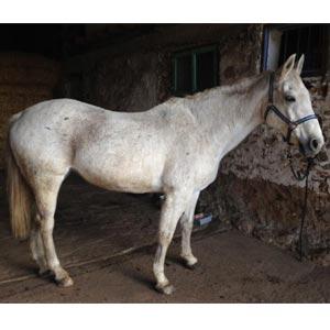 phicogis-equitation-retraite-chevaux-holy-11