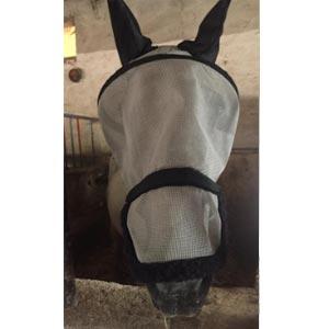 phicogis-equitation-retraite-chevaux-holy-12