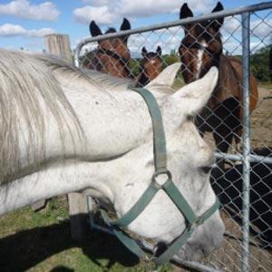 phicogis-equitation-retraite-chevaux-holy-13