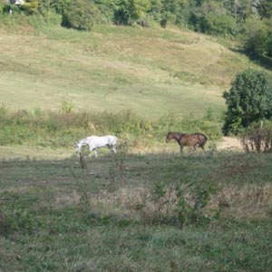 phicogis-equitation-retraite-chevaux-holy-14