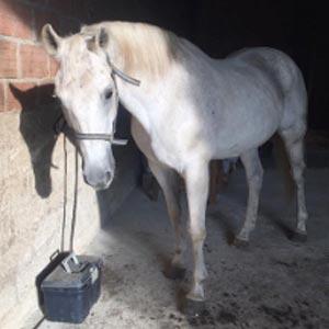 phicogis-equitation-retraite-chevaux-holy-4