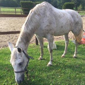 phicogis-equitation-retraite-chevaux-holy-5