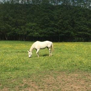 phicogis-equitation-retraite-chevaux-holy-6