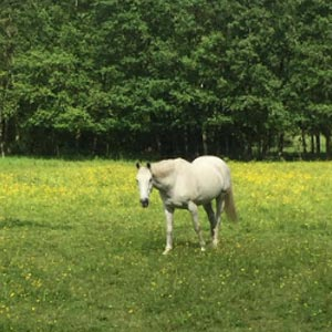 phicogis-equitation-retraite-chevaux-holy-7