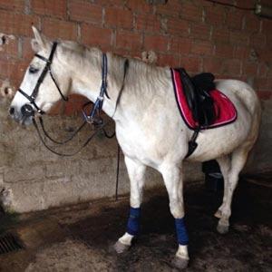 phicogis-equitation-retraite-chevaux-holy-8